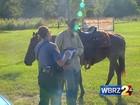 Americano é multado por andar bêbado a cavalo
