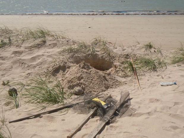 Ninho violado na Praia de Ponta de Campina, em João Pessoa (Foto: Arquivo Pessoal/Clênia Batista)