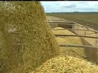 Seca e ataque de lagartas prejudicam produtividade da soja na BA