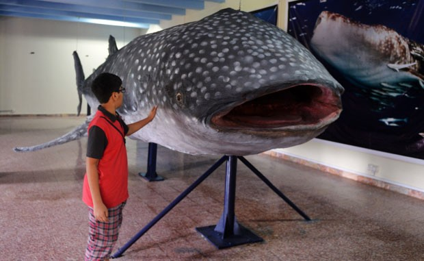 Peixe gigante foi encontrado em fevereiro de 2012 (Foto: Aamir Qureshi/AFP)