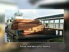 Ibama apreende balsa com 120 metros cúbicos de madeira ilegal