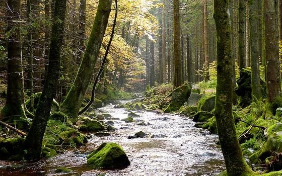 Floresta  Negra na Alemanha (Foto: Roman Boed - Wikimedia Commons)