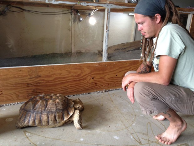 Nos três dias em que ficou desaparecida, tartaruga caminhou quase um quilômetro (Foto: Roberto Acosta/The Flint Journal/AP)