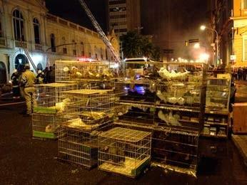 Aves foram resgatadas do mercado durante incêndio (Foto: Felipe Truda/G1)