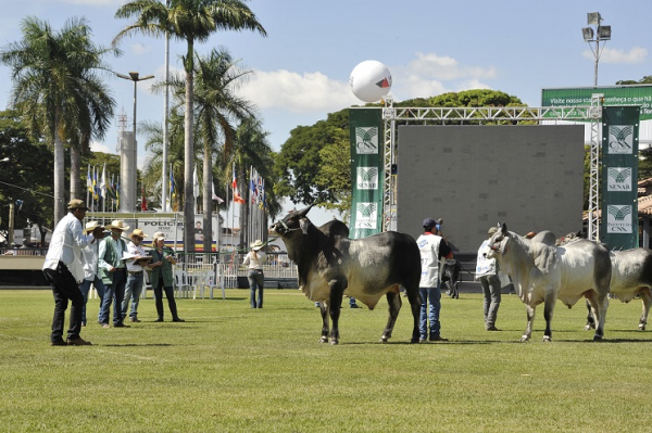 Expozebu-pecuária-boi (Foto: Divulgação)