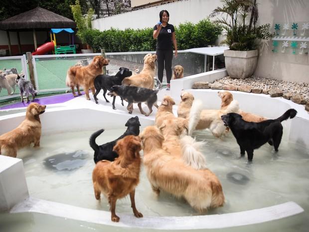 Cães se divertem em brincadeiras na água durante permanência em uma creche para cachorros em São Paulo (Foto: Fábio Tito/G1)