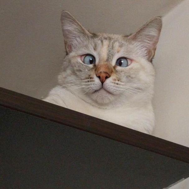 @muni.the.cat (Foto: Instagram/Reprodução)