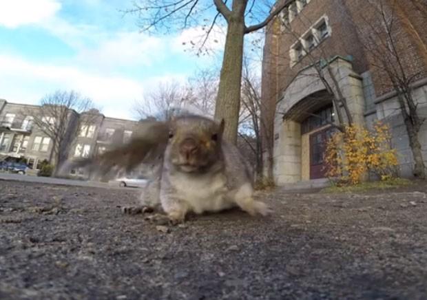 Esquilo 'roubou' câmera GoPro e virou hit na web (Foto: Reprodução/YouTube/Viva Frei)
