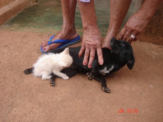 Crika amamenta o gato mesmo sem nunca procriar (Foto: Carina Pereira)