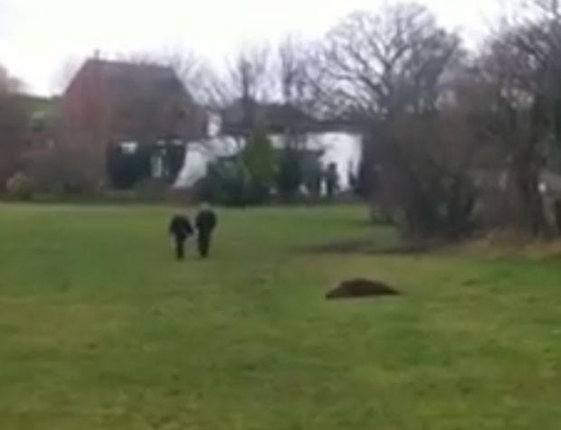 Animal foi encontrado por moradores do condado de Merseyside (Foto: Reprodução/YouTube/Key103)