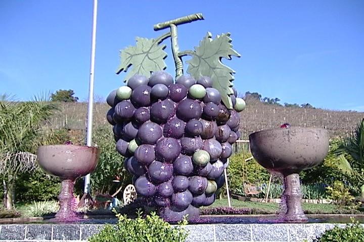 Pinheiro Preto, capital catarinense do vinho  (Foto: Reprodução/RBS TV)