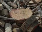 Novacap leiloa madeira de árvores caídas com chuva e podadas no DF