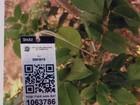 Empresário de SP cria plataforma que faz identificação digital de árvores