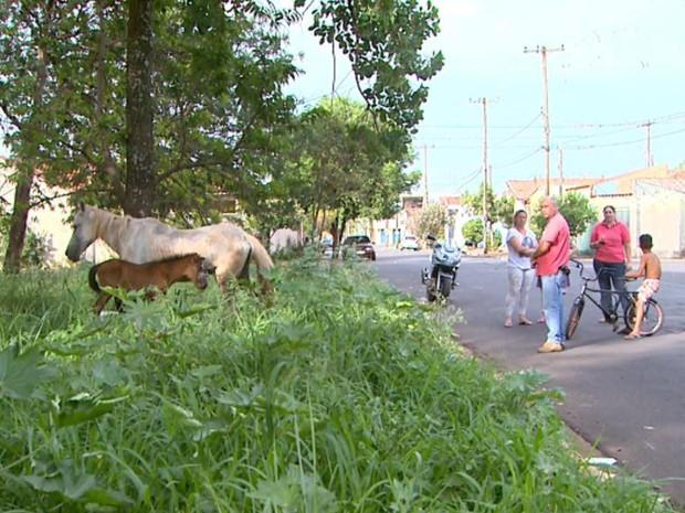 Moradores dizem que é comum encontrar animais de grande porte soltos pela rua (Foto: Luciano Tolentino/EPTV)