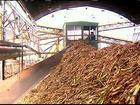Estiagem ajuda na moagem da safra da cana-de-açúcar em SP