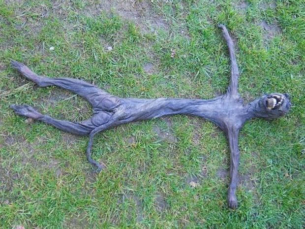 Criatura esquisita era apenas um filhote de babuíno (Foto: Reprodução/Facebook/Unusual facts)