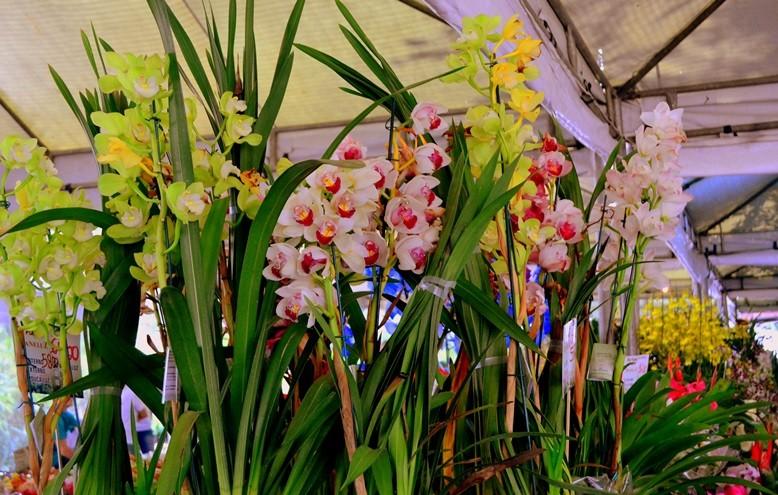 Município de Holambra promove feira com flores comuns, raras e exóticas (Foto: divulgação)