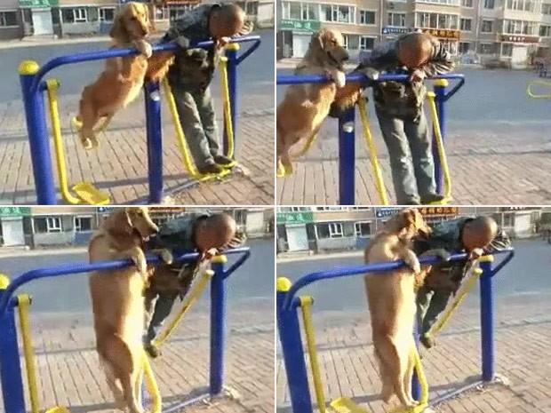 Cão acompanha dono e faz exercícios em equipamento público (Foto: Reprodução/Imgur/SimplyTrey )