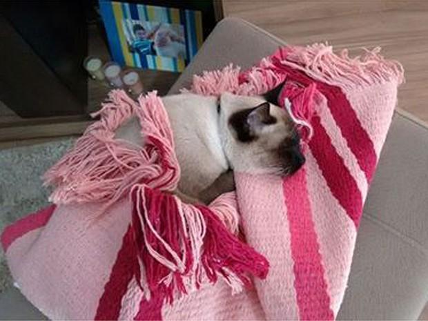 O gatinho Hollis Mason preferiu se proteger do frio se cobrindo em um tapete (Foto: Marcos Barbosa/ VC no G1)