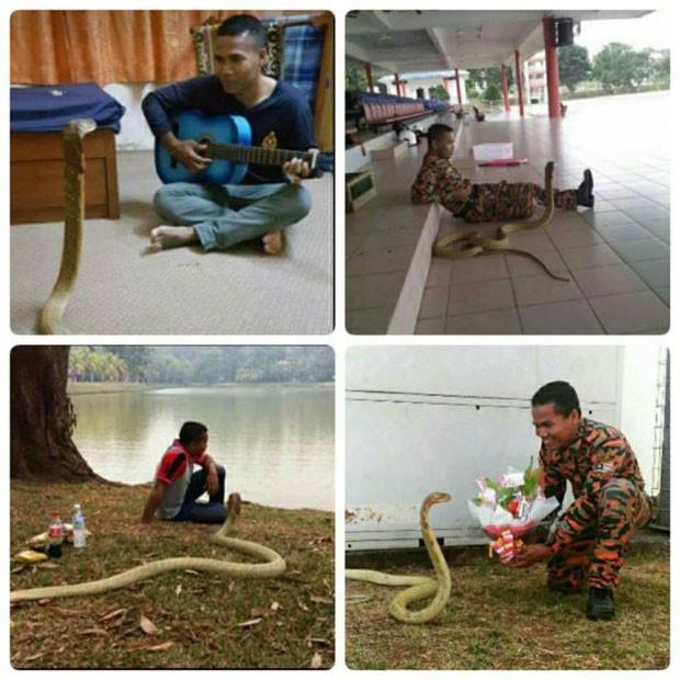 Hussin lida com cobras desde 2007 e treina outros bombeiros em Pahanga (Foto: BBC/Abu Zarin Hussin)