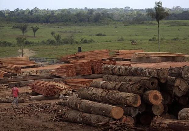 Pilha de madeira extraída ilegalmente da floresta amazônica, no Pará (Foto: Ricardo Moraes/Reuters)