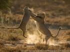 Concurso reúne imagens incríveis de natureza pelo mundo