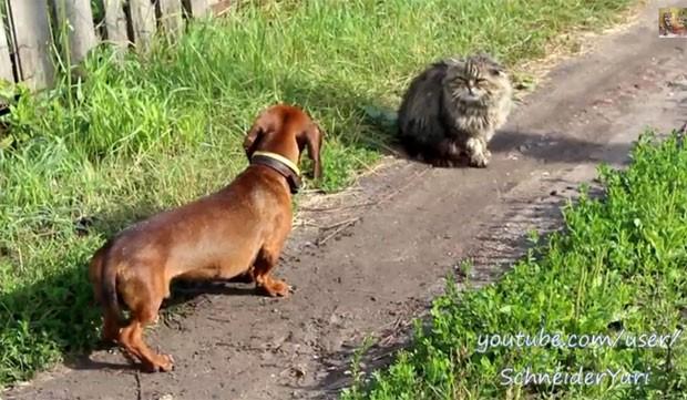Gato faz sucesso ao encarar cão (Foto: Reprodução/YouTube/SchneiderYuri)