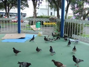 usuários ocupavam coreto do Largo Bom Jesus em meio aos pombos (Foto: Pedro Carlos Leite/G1)