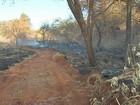 Incêndio em Luís Antônio atinge área em maior reserva de cerrado de SP
