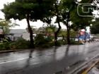 Internautas registram estragos da chuva em Mogi das Cruzes