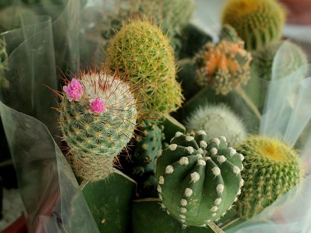 plantas e flores ornamentais (Foto Guto ZafalanFlores de Holambra
