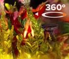 360 GRAUS: dê um giro pelos desfiles do Rio (Veja360)