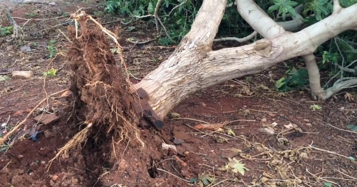 Temporal que atinge Limeira derruba árvores em ao menos quatro ... - Globo.com