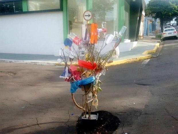 Moradores colocaram árvore para sinalizar um buraco em cruzamento de Piracicaba (Foto: Edijan Del Santo/EPTV)