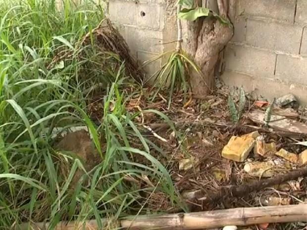 Material foi retirado após visitas nas residências em ações diárias (Foto: Reprodução TV TEM)