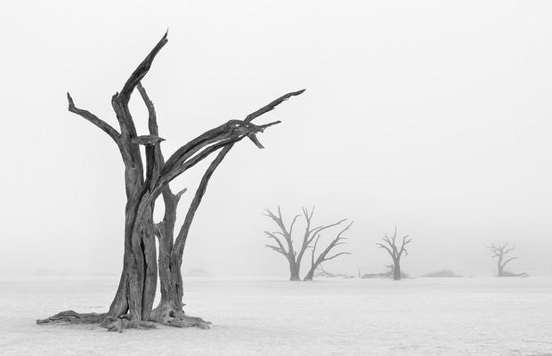 Prêmio da categoria Natureza - Terra, Ar, Fogo e Água (NÃO USAR) (Foto: Marsel van Oosten/www.tpoty.com)