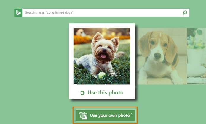 Selecione o botão para escolher uma foto do usuário ou do seu pet (Foto: Reprodução/Barbara Mannara)