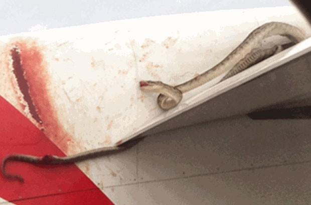 Cobra foi filmada em asa de avião da Qantas (Foto: AFP)