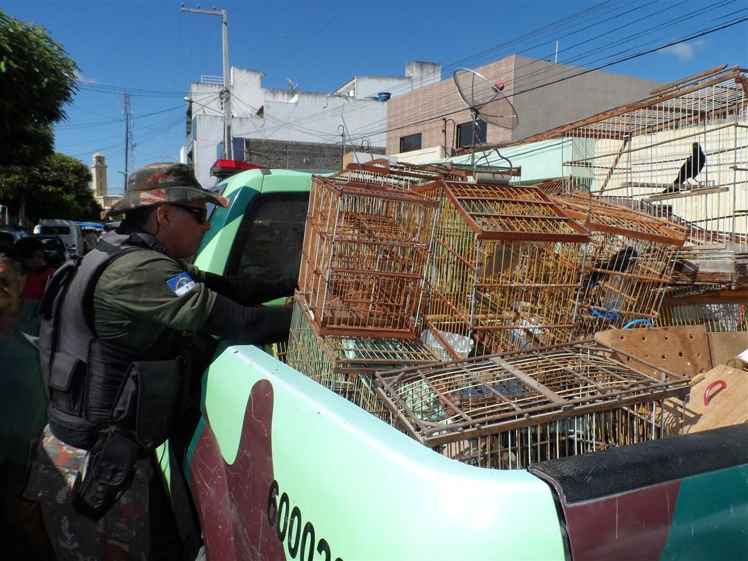 Aves apreendidas pela Companhia Independente de Policiamento do Meio Ambiente (Cipoma) em Toritama, Pernambuco (Foto: Divulgação/ Cipoma)