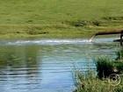 Chuva beneficia plantio da safra de arroz no Rio Grande do Sul