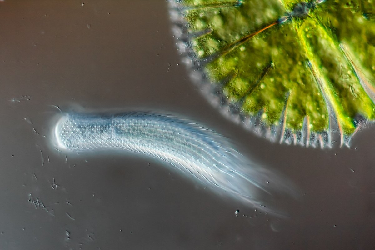 (Foto: Roland Gross/Nikon Small World)