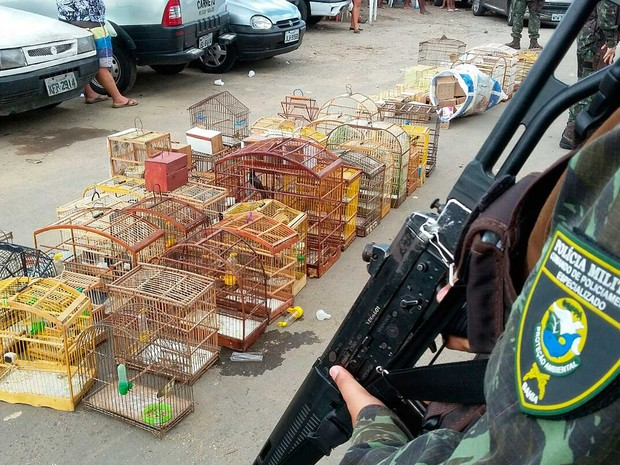 Aves comercializadas são apreendidas em Salvador, na Bahia (Foto: Divulgação/COPPA)