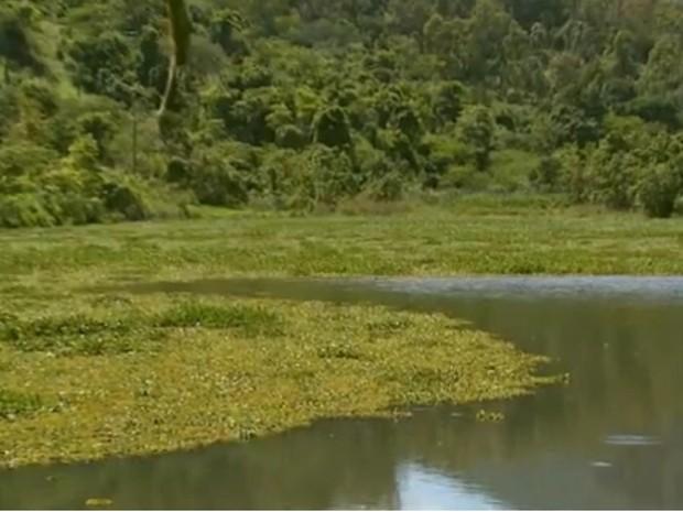 Lago entra São João da Boa Vista (SP) e Águas da Prata (SP) está coberto de aguapés, indincado poluição no local. (Foto: Oscar Herclano Jr/ EPTV)