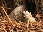 O encanto dos mamíferos no Reino Unido