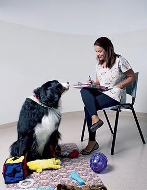 REMÉDIO OU TERAPIA? A veterinária Juliana Gil, de São Paulo. Ela atende cães em sessões individuais (Foto: Camila Fontana)