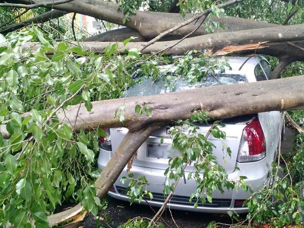 Árvore cai durante temporal e atinge carro no Grajaú, em São Paulo (Foto: Andre Luis Lino/VC no G1)
