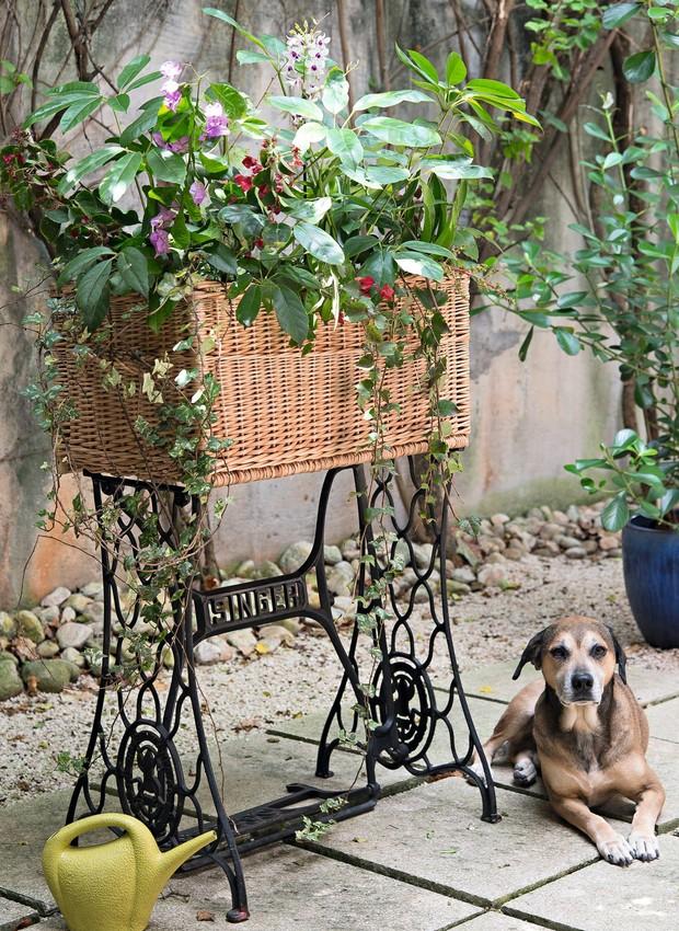 A base da máquina de costura rende um lindo suporte para plantas. Cesto Cestarias Régio. Participação especial, Conhaque, o cão (Foto: Cacá Bratke / Editora Globo)