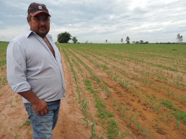 Agricultor retomou a produção após perda de mais de 70% da colheita (Foto: Ana Carolina Levorato/G1)