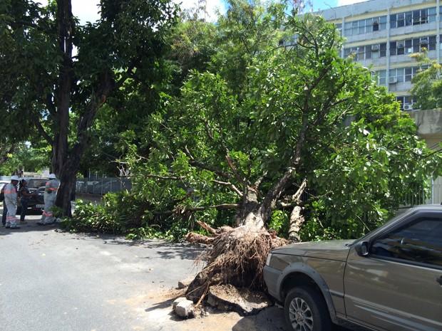 Árvore caiu próximo ao Centro Administrativo do Estado (Foto: paraíba)