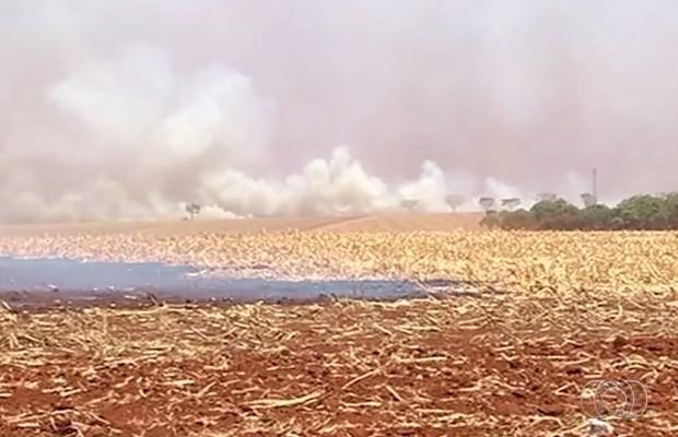 Incêncio em palhada atingiu parte da rede de transmissão da Celg, em Goiás (Foto: Reprodução/ TV Anhanguera)